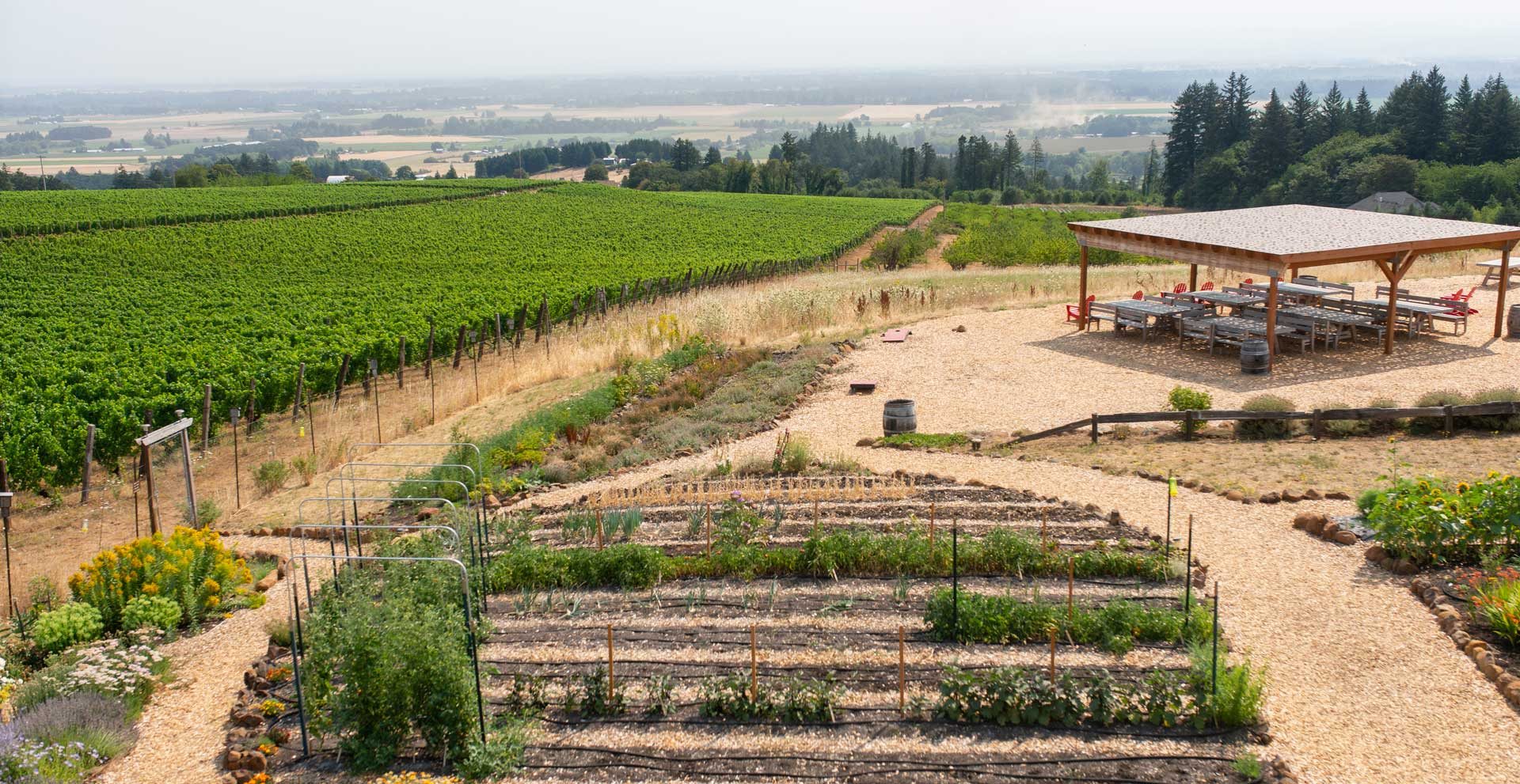 wide angle shot of vineyard
